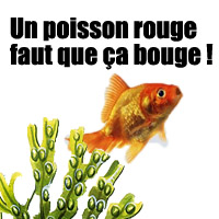 Les animaux prot ger le journal de la protection animale for Combien coute un poisson rouge