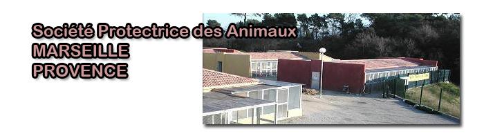 refuge spa de marseille 13 le journal de la protection animale. Black Bedroom Furniture Sets. Home Design Ideas