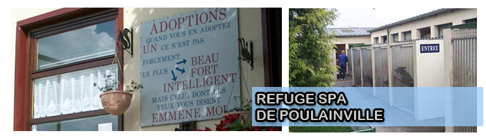 refuge spa de poulainville 80 le journal de la protection animale. Black Bedroom Furniture Sets. Home Design Ideas